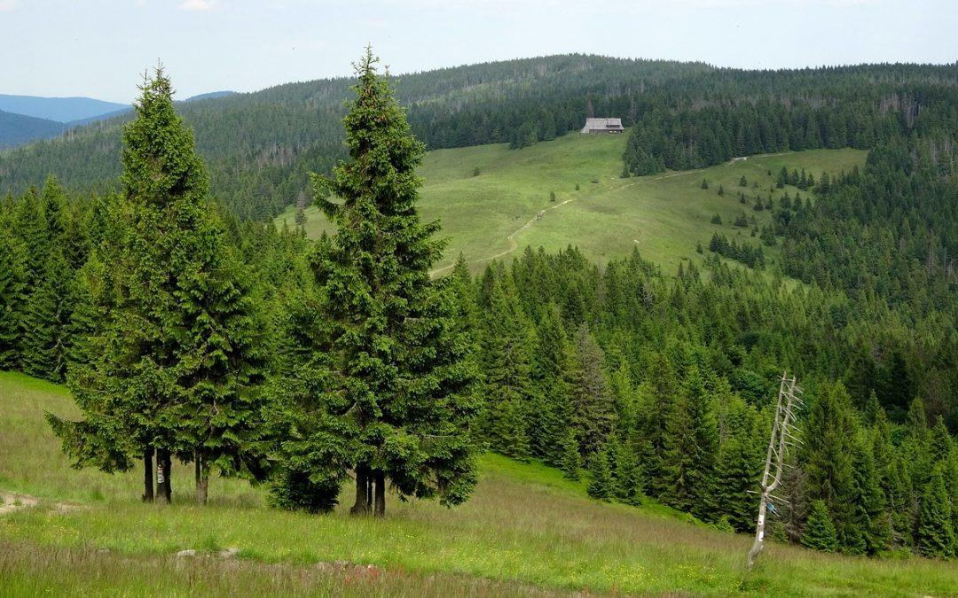 Turbacz – najwyższy szczyt w Gorcach